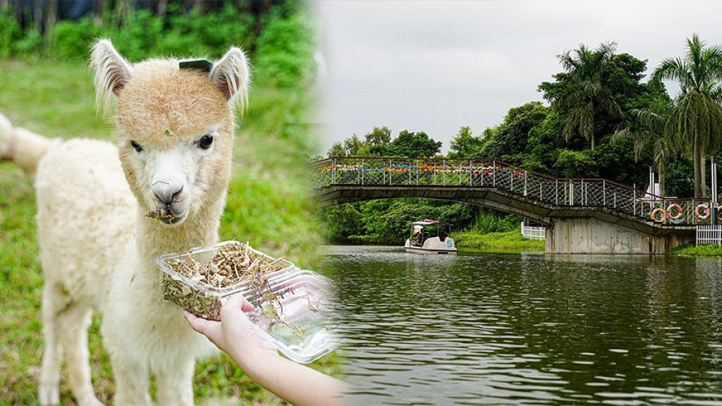【親子好去處】大埔蝶豆花園有機農莊5大玩樂重點!零距離接觸羊駝/觀光船遊船河/工作坊