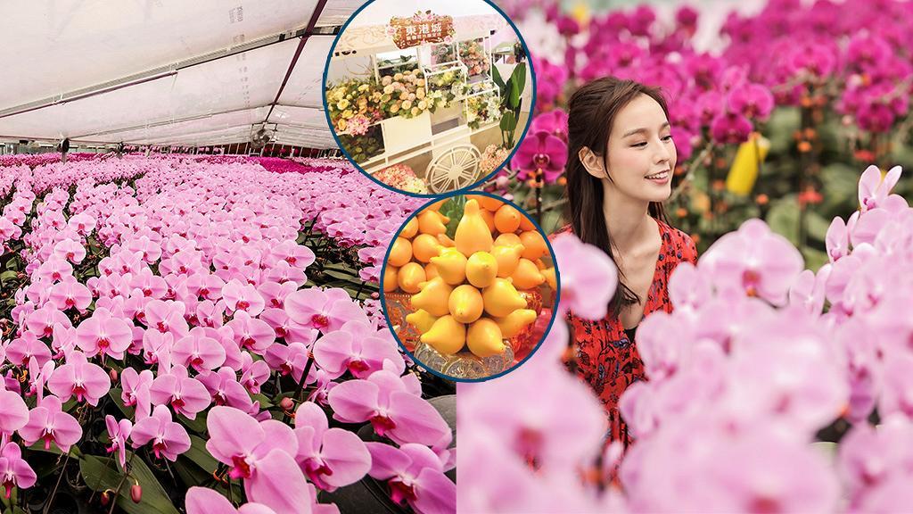 【新年好去處2021】全港最新6大年宵花市率先開鑼!日本城/實惠/HKTVmall線上花市