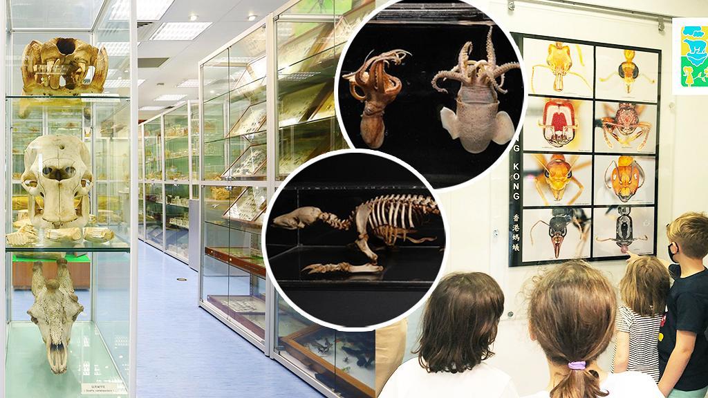 【香港大學好去處】香港首個生物多樣性博物館開幕!藏過萬物種標本/珍稀物種/預約參觀詳情