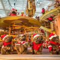 80隻聖誕小熊 華麗登陸置地廣場