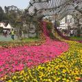 維園花卉展3月開鑼!$14入場/10萬棵花朵任影