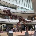 【中環好去處】免費睇恐龍展覽 12米長暴龍化石!