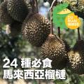 榴槤達人分享!教你分24種必食馬來西亞榴槤
