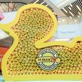 【屯門/沙田/粉嶺好去處】港產經典小黃鴨70週年!3000隻小黃鴨+玩具精品展