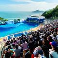 【海洋公園】海洋公園2月推門票6折優惠!特快通行+餐飲購物優惠