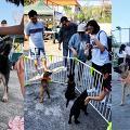 【元朗好去處】寵物領養市集嘉年華登場 為被遺棄狗狗尋找一個家!