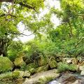 【行山路線】易行靚景行山徑推介!欣賞3道瀑布美景 - 小夏威夷瀑布