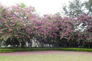 秋冬期間限定!一次賞齊4大粉紅/白色花+最佳觀賞點