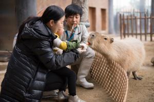海洋公園親親動物月開鑼 任影天然呆樹懶+親手餵水豚