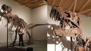 【中環好去處】12米長暴龍化石即將登陸中環 6月免費睇恐龍展覽!