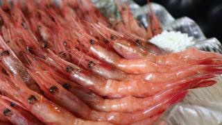 【深水埗美食】$88原隻連殼甜蝦放題 加$30升級任食鮮甜赤蝦刺身