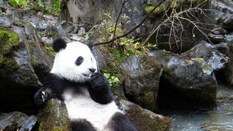 《熊貓愛回家》太空館全天域電影