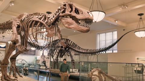 不限年齡!港大免費恐龍證書課程 戈壁沙漠挖掘8千年歷史化石