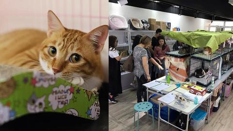 【荃灣好去處】荃灣貓咪領養日再度回歸 將愛送給被遺棄動物!