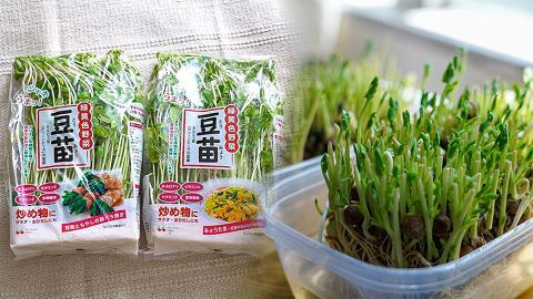 屋企輕鬆種$9可再生豆苗!實測可翻種4次好食又玩得 香港日式超市有售