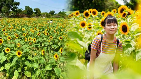 【元朗好去處】新田農場太陽花節2021開鑼!3萬5千呎引入香檳+紅色向日葵/交通+開放詳情一覽