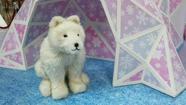 朗豪坊白色聖誕  探索極地動物奧秘