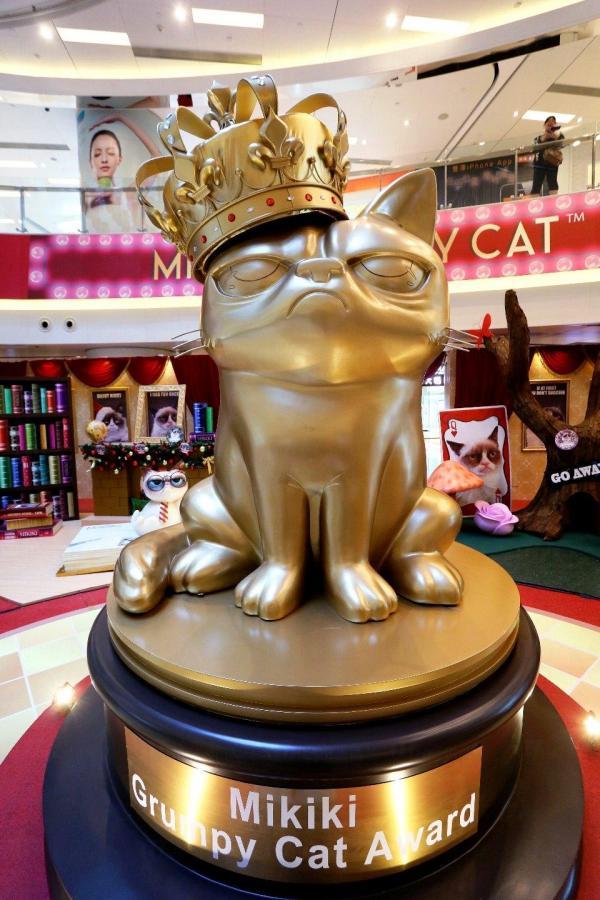外號「不爽貓」的貓女堪稱當今世上最紅的貓咪,稱得上是貓界天后,以一副不爽咀臉走紅全球。