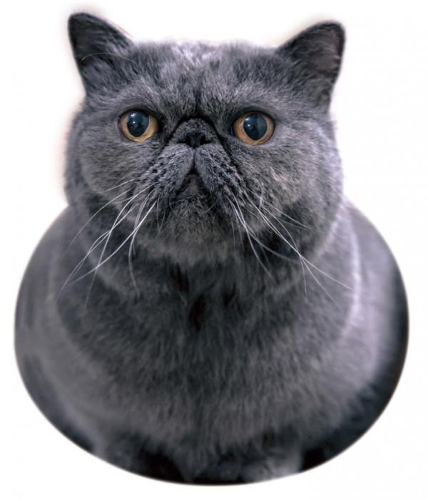 與愛貓住大型貓屋 「來做一日喵」市集與愛貓住大型貓屋 「來做一日喵」市集