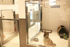 尖沙咀7千呎一站式寵物生活店開幕︱日平價眼鏡店首推迪士尼系列