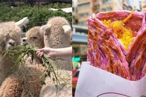 澳洲羊駝首度登陸香港農莊 | 太安樓平民美食掃街推薦