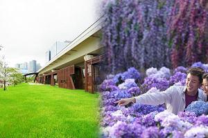 北角3千呎紫花海+紫滕花隧道︱9月份6大展覽推介