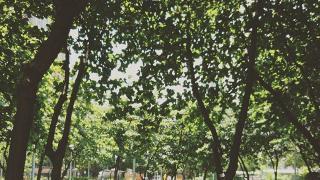 加多近街臨時花園
