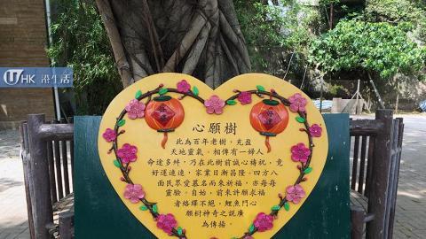 鯉魚門心願樹
