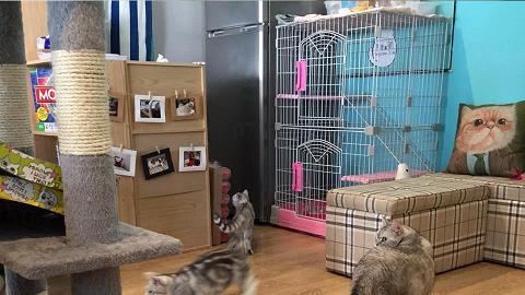 胖胖貓 Fattyscat Cafe