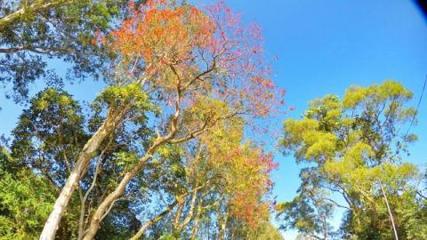 觀賞紅葉的小秘點,烏蛟騰尋找香港的世外桃園