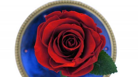 浪漫又實用!重現《美女與野獸》戲中玫瑰