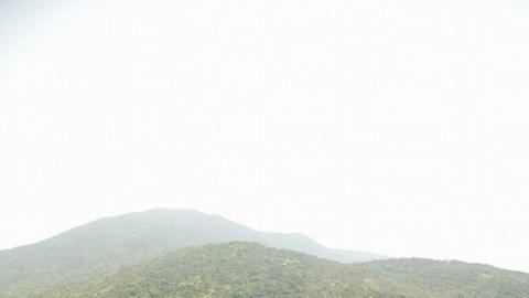 大潭紅樹林