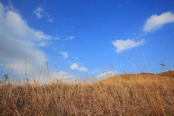 秋天時分會長滿棕色或金色的芒草,有如一幅天然草蓆。