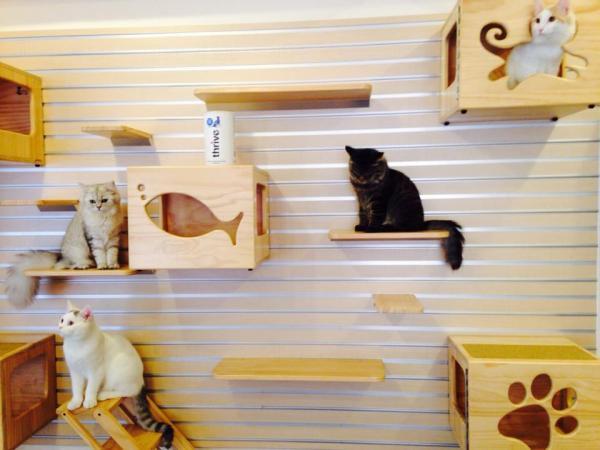香港首間貓咪主題樂園。