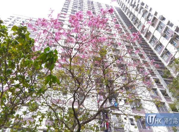 2016年部分花樹已經開花