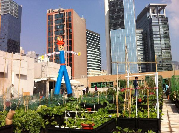 (圖: FB@City Farm 都市農莊)