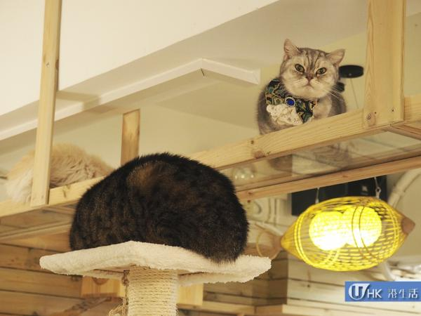 Mr. & Mrs. Cat Cafe