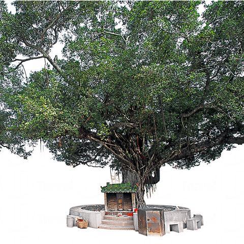 榕樹樹下天后古廟。 相片來源  :元朗區議會