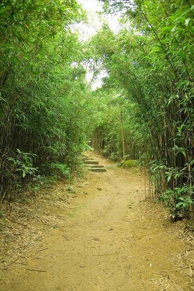 土地灣的小竹林。