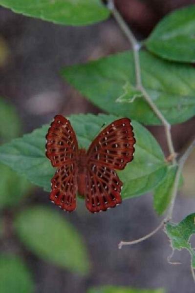 甲龍古道生態園蝴蝶在此棲息和覓食。