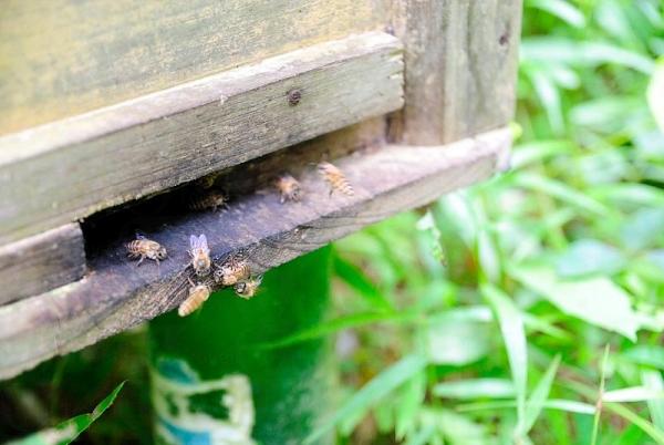 老闆會與客人談養蜂之道。