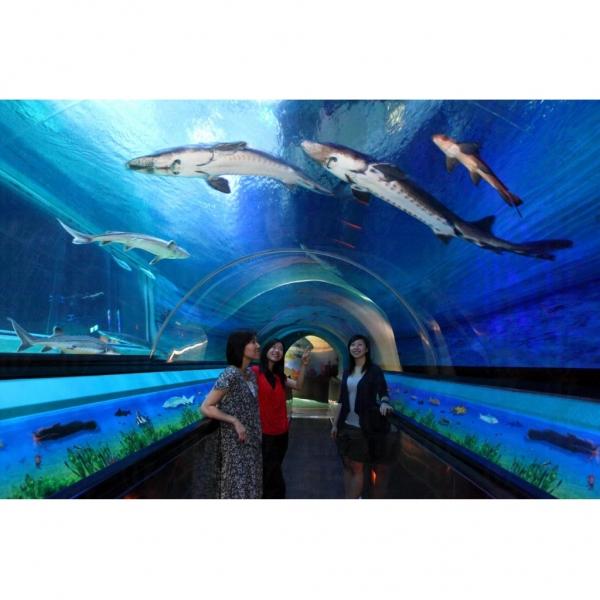 海洋公園耗資逾千萬港元打造的「中華鱘館—長江足跡」。