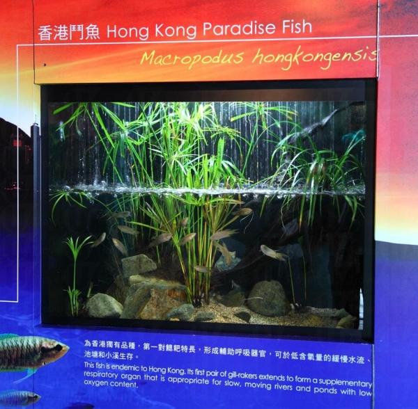 中華鱘館擁有全港最大的淡水魚類展館設計以長江自然生態環境及其急速水流為藍本。