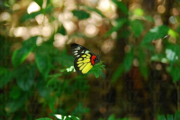 園內蝴蝶多不勝數。