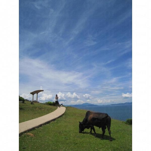 牛隻成為了一幅獨一無二的風景。