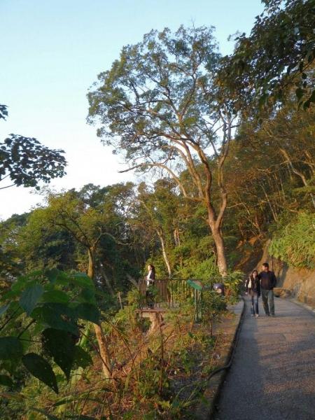 步道可飽覽維港、九龍半島等景色,當中以黃昏與晚上的景色最為醉人,屬情侶談心聖地。(相片來源:Clara Lee)