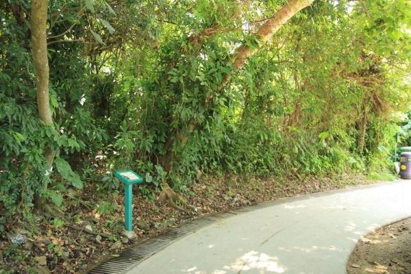 南丫島家樂徑地勢平坦,適合一家大小或三五知己慢慢行走。