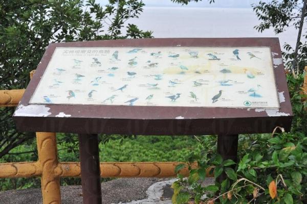 觀鳥軒的解說牌,說明冬天時份最常見的是黑臉琵鷺及針尾鴨等。