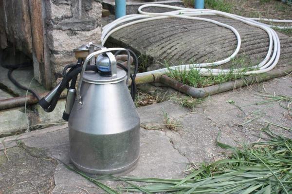 用來榨取牛奶的機器,不經人手,確保乾淨衛生。