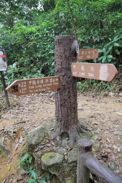 這路標是甲龍林徑和甲龍古道的分岔口,直走是甲龍古道,左轉則是甲龍林徑。